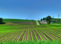 Modificarea Legii vânzării terenurilor nu trebuie făcută contra fermierilor, sectorului agroalimentar și României