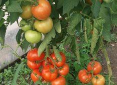 Comunicat de presă: ALDE Botoșani susține menținerea subvențiilor în agricultură