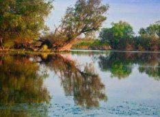 Descopera Delta Dunarii cu o excursie organizata de profesionisti