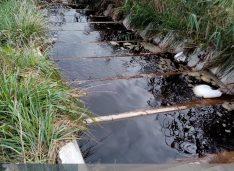 E grav! Levigatul de la groapa de gunoi din Victoria a ajuns până la acumularea piscicolă din Sulițoaia. Fermierii avertizați să nu lase animalele să bea apă din Burla