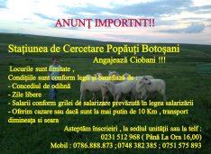 Stațiunea Popăuți angajează ciobani. Oferta include transport sau cazare, concedii