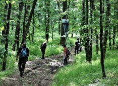 FOTO Traseu pentru biciclete marcat în Pădurea Baisa, în aria protejată Dorohoi-Șaua Bucecei